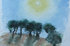 olive trees- Umbria